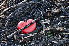 Burning Love -No Valentine Day- // Amor quemado -Dia de los Desenamorados-